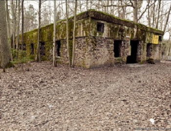 Власти Польши решили сделать из «Волчьего логова» Гитлера музей