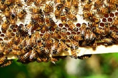 В США перевернулся грузовик, перевозивший 130 млн пчел