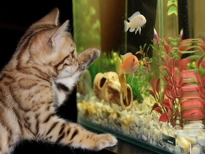 Как правильно обслуживать аквариумы